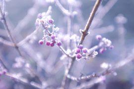 huile-essentielle-hiver
