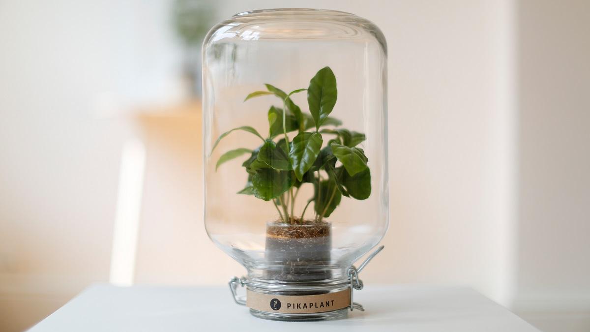 plantes en bocal de verre le terrarium diy ne pas louper. Black Bedroom Furniture Sets. Home Design Ideas