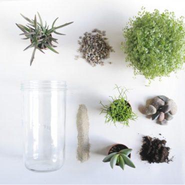 Terrarium DIY, mes plantes en bocal