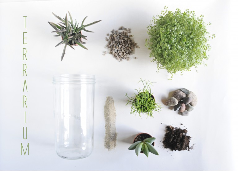 terrarium diy mes plantes en bocal de verre. Black Bedroom Furniture Sets. Home Design Ideas