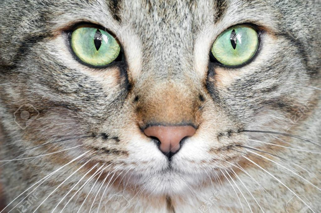 maquillage yeux de chat